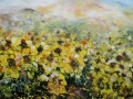 17c-36 x 48 Sunflowers in bloom ~3.JPG